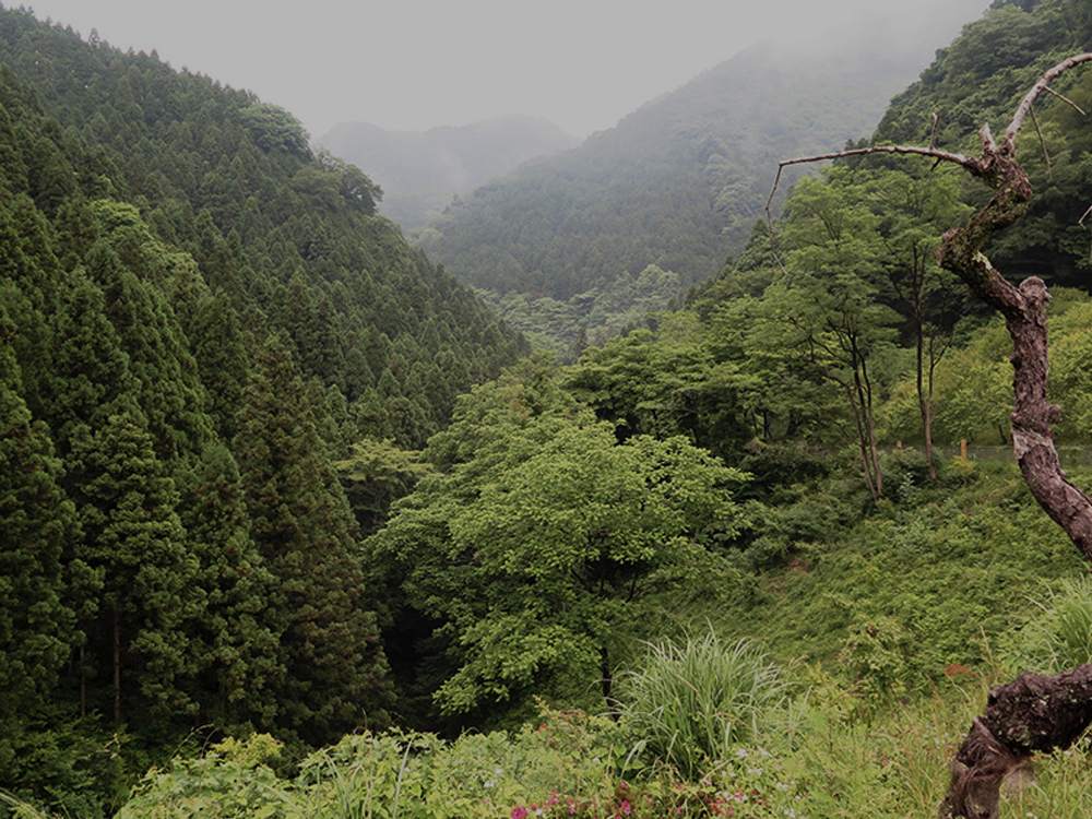 kogesawa