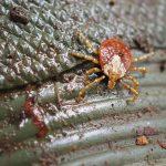 ダニによる感染症 ~森づくり活動中のダニ被害予防対策~