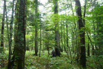 『針広混交林とはどんな森林か』横井 秀一インタビュー